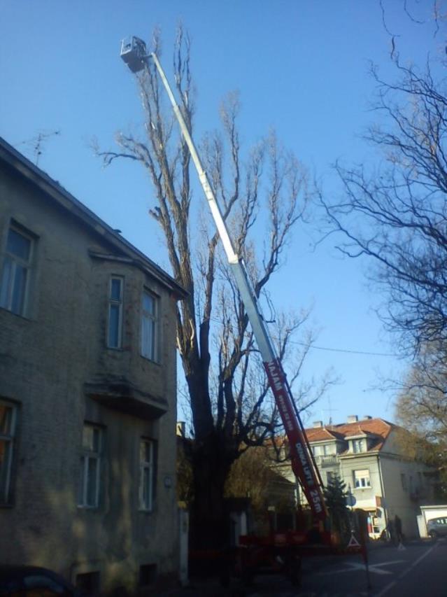 rušenje visokih stabala