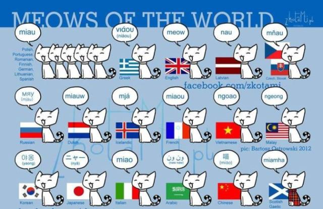 mjau na različitim jezicima