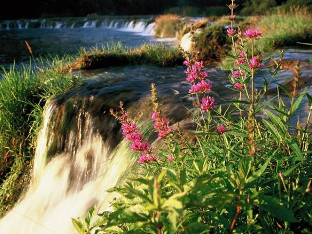 Sedreni slapovi polukružnog oblika potpuno prekrajaju karakteristiku Mrežnice. Te barijere stvaraju silovite slapove s jedne strane i mirni, ujezerene dijelove između njih.