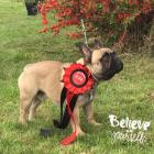 Kolya Le Grand Totegnac: BEST OF BREED