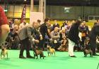 CRUFTS: Diablesse Totegnac