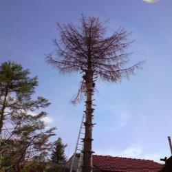 ru enje drve a